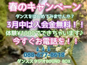 【春のキャンペーン】